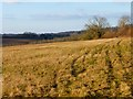 SU8288 : Grassland, Great Marlow by Andrew Smith