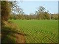 SU8984 : Farmland, Cookham by Andrew Smith