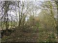 TM2668 : King's Lane, a bridleway by Adrian S Pye
