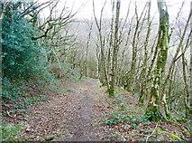 SE0722 : Elland FP101 in North Dean Wood by Humphrey Bolton