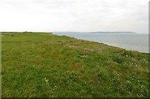 SZ2492 : Daisy covered clifftop at Barton on Sea by Steve Daniels