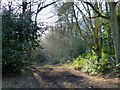 SP9712 : Ashridge Estate - Track through Old Copse by Rob Farrow