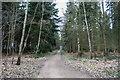 SK8455 : Track into Stapleford Wood by J.Hannan-Briggs