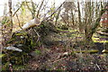 NX4858 : Moss covered Stane Dyke by Billy McCrorie