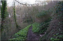 SX9265 : Path leading down to Babbacombe Beach by Ian S
