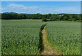 SO7659 : Footpath through the crops to Martley by Mat Fascione