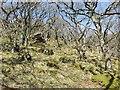 NM4541 : Woodland, Lagganulva by Richard Webb