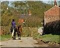 TA1552 : Horses on the lane, Dunnington by Paul Harrop