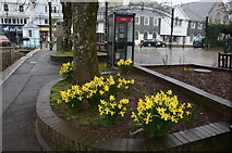SX8751 : Daffodils along the harbour side, Dartmouth by Ian S