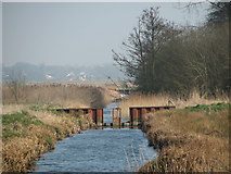 TG3504 : Weir in drainage ditch by Evelyn Simak