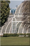 TQ1876 : The Palm House by Ian Capper