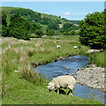 SN8552 : Grazing by the Gwesyn in Powys by Roger  Kidd