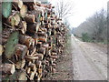 TM4052 : Pile Of Logs by Keith Evans