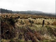 H6160 : Rushy ground, Ballymackilroy by Kenneth  Allen