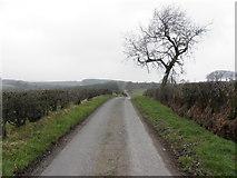 H6160 : Greenhill Road, Tullyglush by Kenneth  Allen