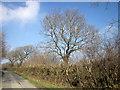 SX2791 : Lane near Brazacott by Derek Harper