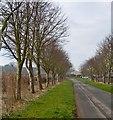 TA0854 : Brigham Lane, E Yorks by Paul Harrop