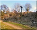 SJ9494 : Telegraph pole by the Trans Pennine Trail by Gerald England