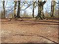 SU9869 : Virginia Water Plantation by Alan Hunt