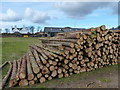 NO4801 : Timber stack by James Allan