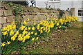 SO7031 : Daffodils in front of Dymock church by Philip Halling