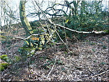 SE0722 : Old wall in North Dean Wood by Humphrey Bolton