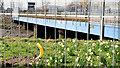J3675 : The Connswater railway bridge, Belfast (March 2015) by Albert Bridge