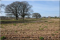 SO6731 : Friar's Court, Kempley by Philip Halling