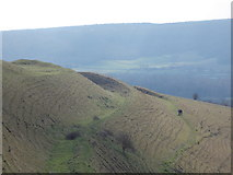 ST8412 : Chlid Okeford: three walkers on Hambledon Hill by Chris Downer