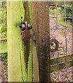 SS8846 : Latch, path above Porlock by Derek Harper