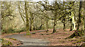 J4577 : Path and trees, Cairn Wood, Craigantlet - March 2015(1) by Albert Bridge