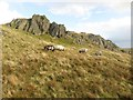 NY4305 : Rock outcrop and sheep on Yoke by Graham Robson