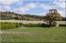 TQ2151 : North of Kemps Farm by Ian Capper