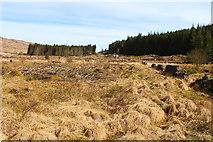 NX5071 : Felled Woodland by Billy McCrorie