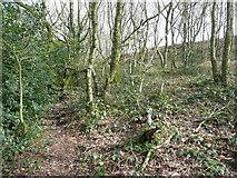 SE0722 : Footpath through North Dean Wood by Humphrey Bolton