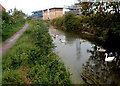 ST3036 : Swans and cygnets on the canal, Bridgwater by Jaggery