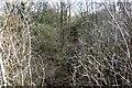 SP6329 : Overgrown trackbed near Chetwode by Steve Daniels