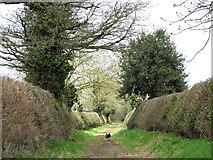 TG2103 : Cut hedgerows beside Mangreen by Evelyn Simak