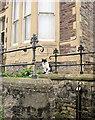 ST5775 : Cat in Redland #1 by Derek Harper
