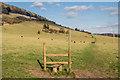TQ1850 : Grazing land, Lower Box Hill Farm by Ian Capper