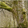 NY6393 : Bird feeder by the Squirrel Hut, Kielder Castle by Rich Tea