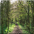 TQ7094 : Path in Claypitshills Wood, Billericay by Roger Jones