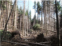 J3630 : Storm uprooted trees in the Donard Forest by Eric Jones