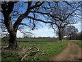SE3953 : Bridleway in South Park by Derek Harper