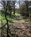 SE4253 : Footpath to Cowthorpe by Derek Harper