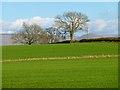 NY6223 : Farmland, Bolton by Andrew Smith