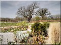 TQ0658 : RHS Wisley, Garden behind the Glasshouse by David Dixon
