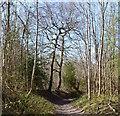 SU7889 : Bridleway, Parmoor, Buckinghamshire by Oswald Bertram