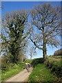 SX3579 : Lane north of Lowleybridge by Derek Harper