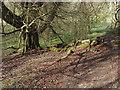 TQ0850 : Footpath, Hook Wood by Alan Hunt
